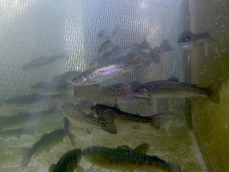 Cooling systems at american river hatchery providing for Ca dept of fish and wildlife
